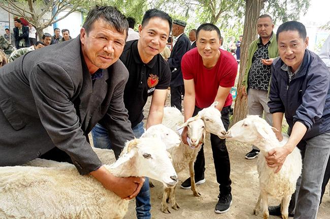 扶贫羊领进家 牧民脱贫有盼头