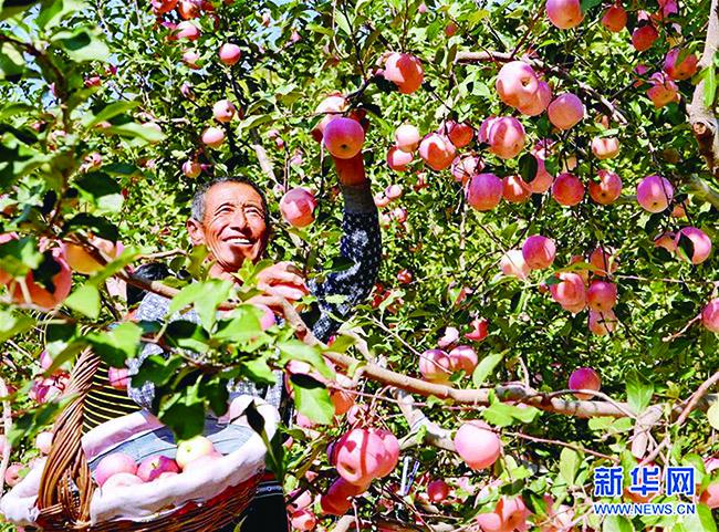 河北秦皇岛引导农民种植林果致富