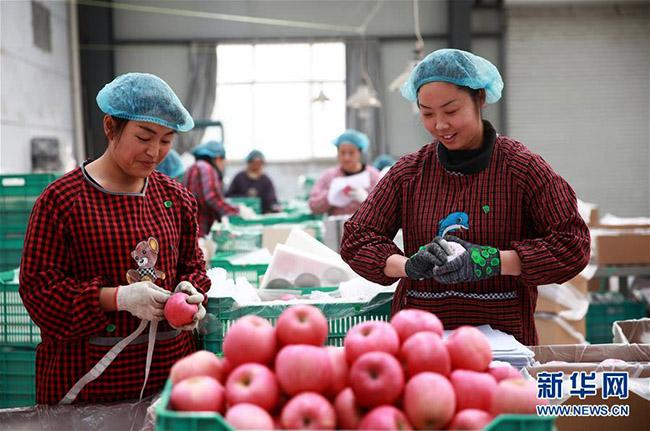 河北省内丘县不断推进产业扶贫