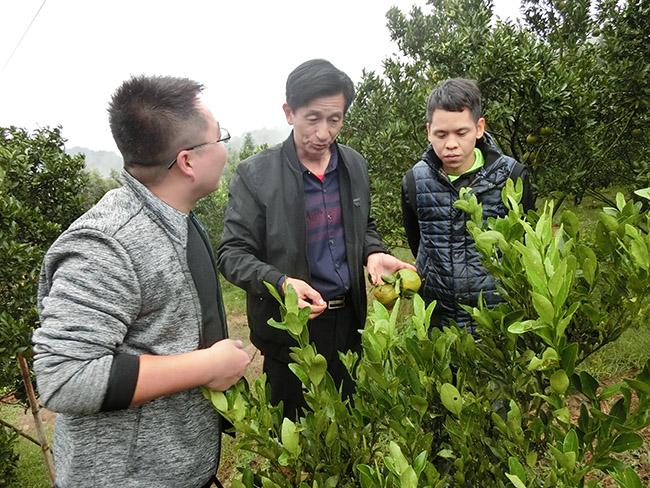 福建永安组织技术人员指导果农科学种植