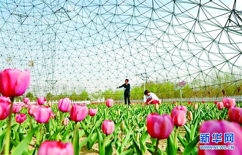 肃宁县引导农民规模化种植