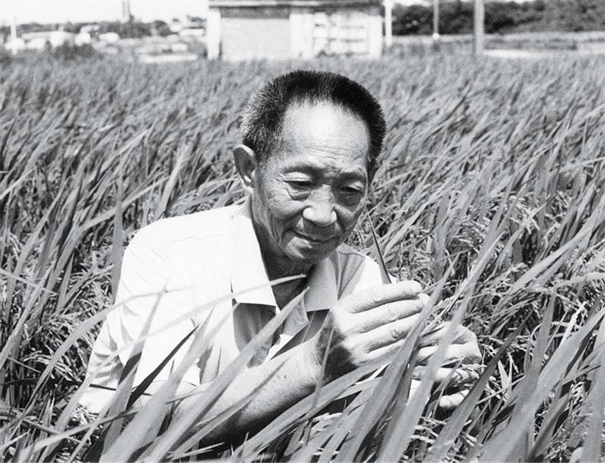 袁隆平:一个最大的善人
